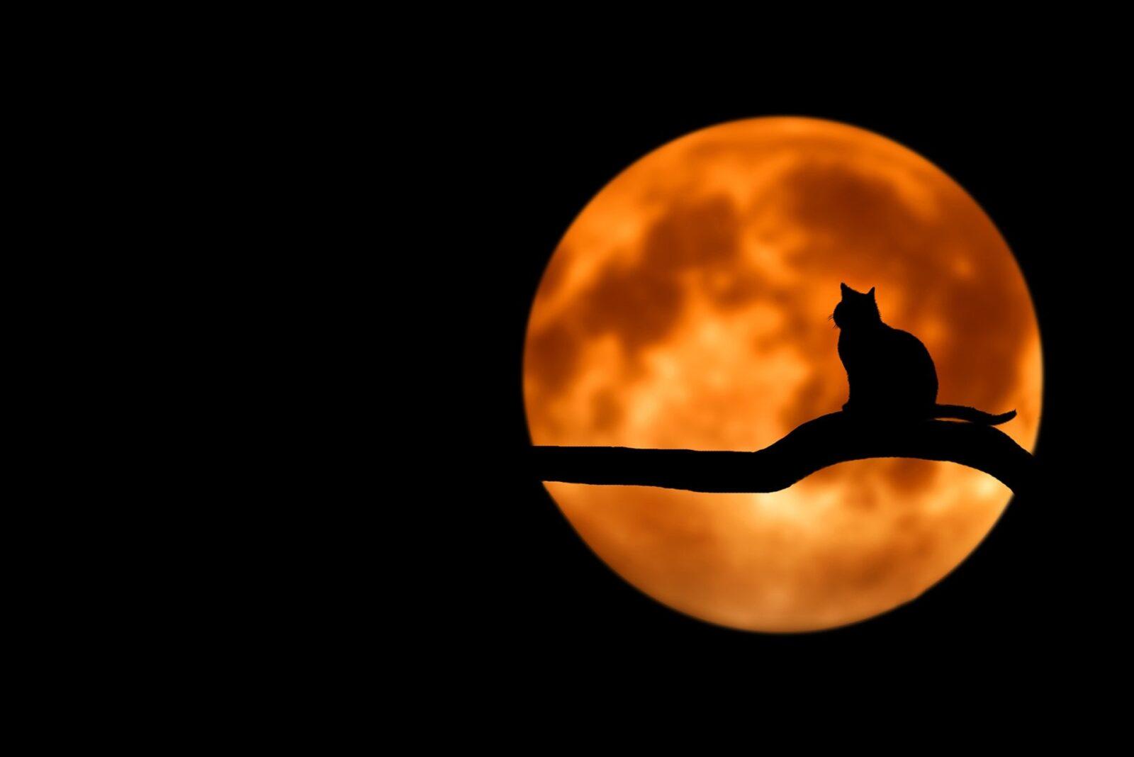 Kissa istuu oksalla kuutamossa.