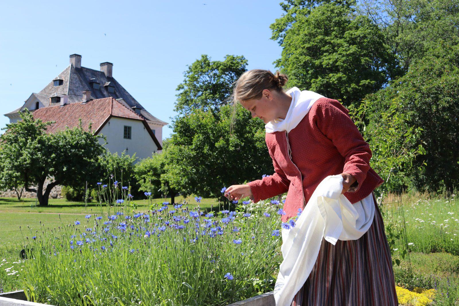 Punaiseen atkkiin, valkoiseen essuun ja raidalliseen hameeseen pukeutunut opas katselee puutarhassa sinisiä kukkia. Taustalla näkyy vihreää puistoa ja Louhisaaren kartano.