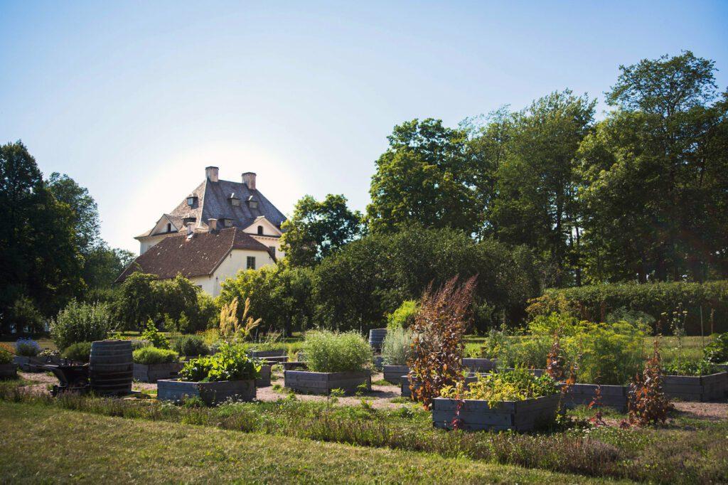 Louhisaaren kartanon kalmilainen hyötypuutarha. Kasveja harmaissa istutuslaatikoissa, taustalla puutarhaa ja Louhisaaren kartano. Sininen, pilvetön taivas.