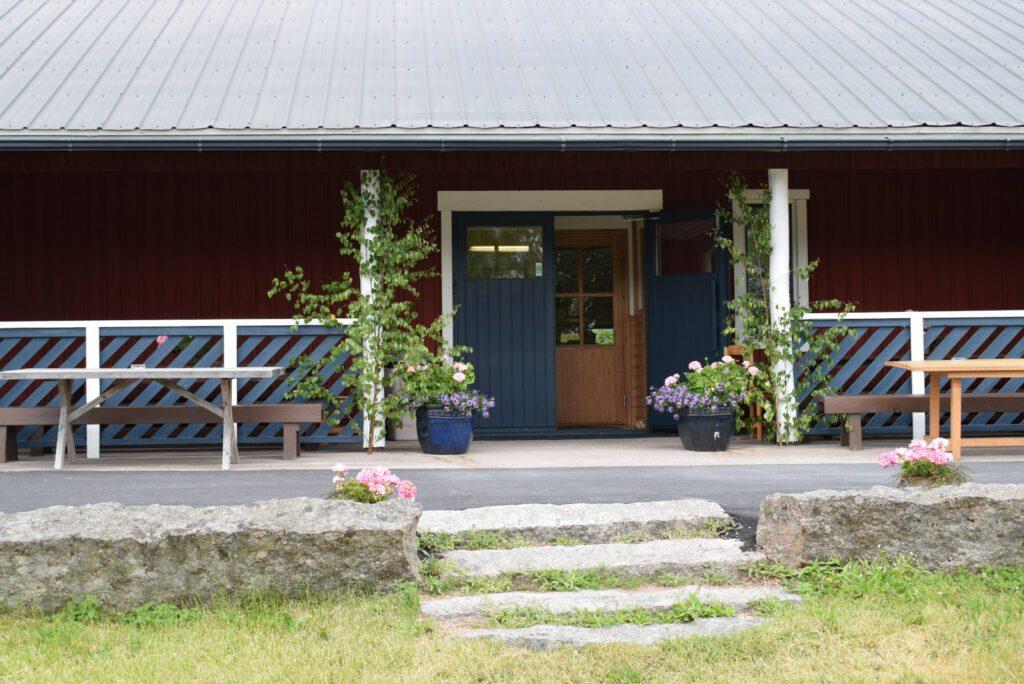 Louhisaaren kartanon kahvilan siniset pariovet ulkoapäin. Oven molemmilla puolilla juhannuskoivut. Punainen seinä ja kiviset rappuset ovelle.