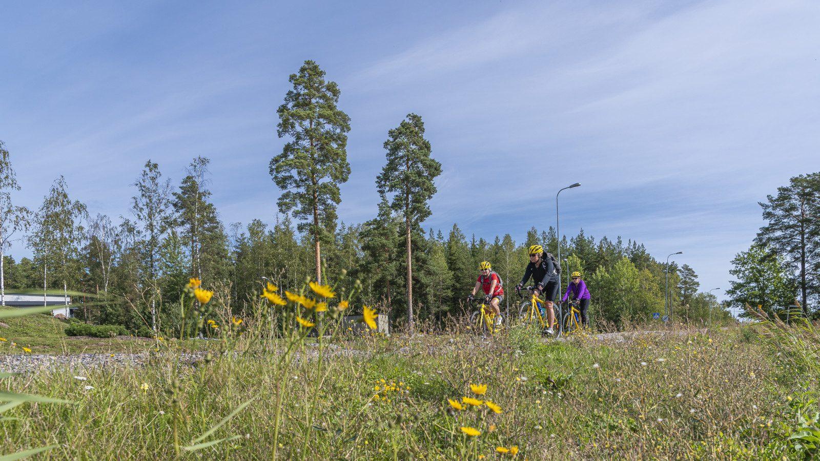 Kolme pyöräilijää pyöräilee kesällä pyörätiellä, metsää taustalla ja voikukkia edustalla.